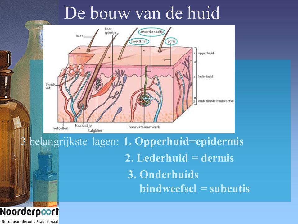 De bouw van de huid 3 belangrijkste lagen: 1. Opperhuid=epidermis 2. Lederhuid = dermis 3. Onderhuids bindweefsel = subcutis