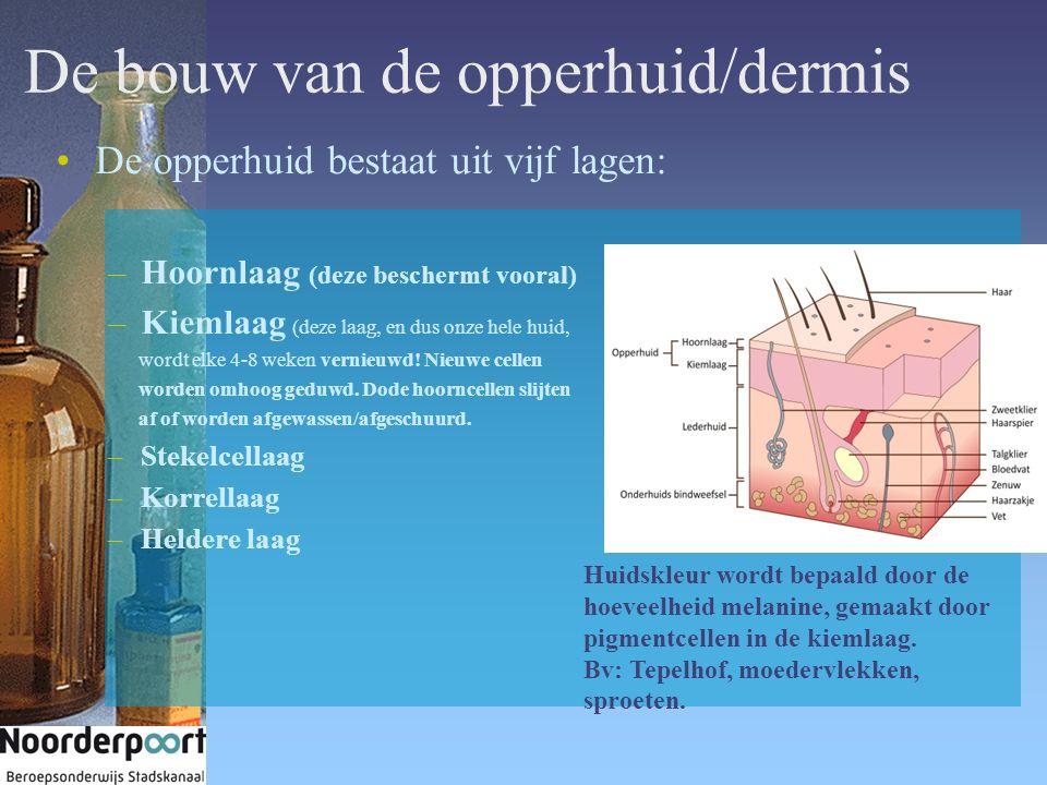De bouw van de opperhuid/dermis De opperhuid bestaat uit vijf lagen: –Hoornlaag (deze beschermt vooral) –Kiemlaag (deze laag, en dus onze hele huid, w