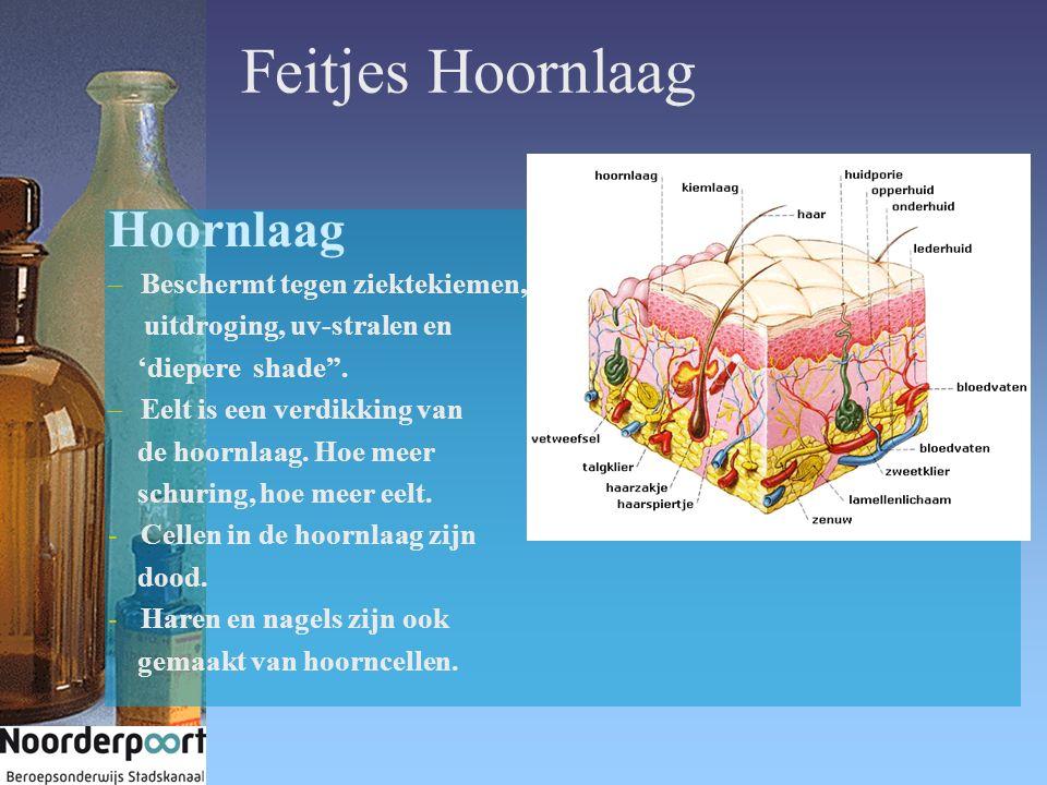 """Feitjes Hoornlaag Hoornlaag –Beschermt tegen ziektekiemen, uitdroging, uv-stralen en 'diepere shade"""". –Eelt is een verdikking van de hoornlaag. Hoe me"""