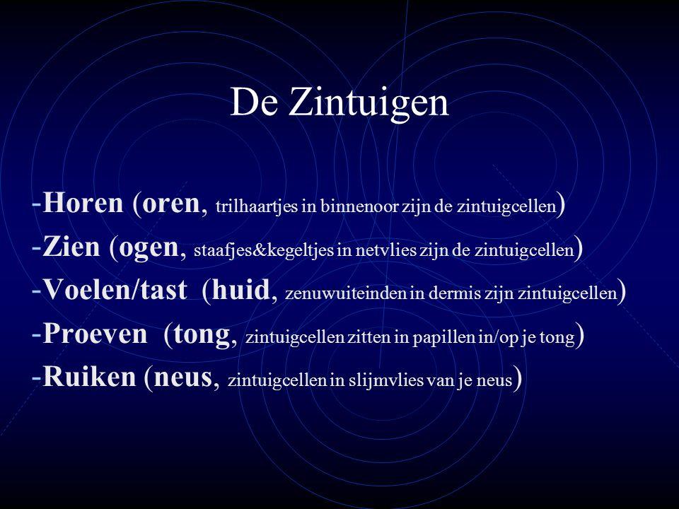 De Zintuigen - Horen (oren, trilhaartjes in binnenoor zijn de zintuigcellen ) - Zien (ogen, staafjes&kegeltjes in netvlies zijn de zintuigcellen ) - V