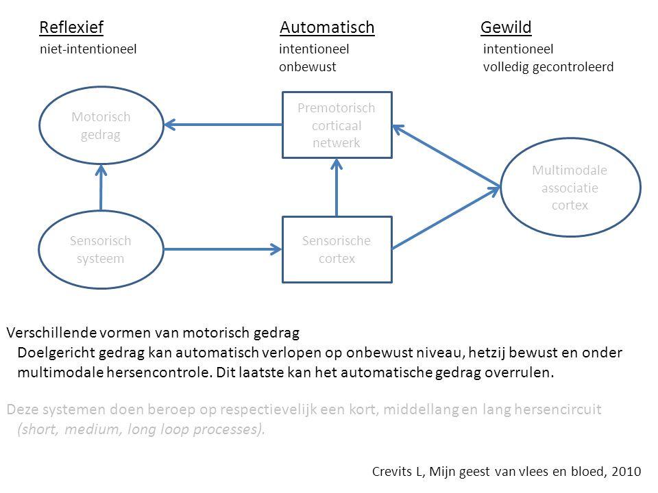 Motorisch gedrag Sensorisch systeem Premotorisch corticaal netwerk Sensorische cortex Multimodale associatie cortex Reflexief Automatisch Gewild niet-intentioneel intentioneel intentioneel onbewust volledig gecontroleerd Verschillende vormen van motorisch gedrag Doelgericht gedrag kan automatisch verlopen op onbewust niveau, hetzij bewust en onder multimodale hersencontrole.