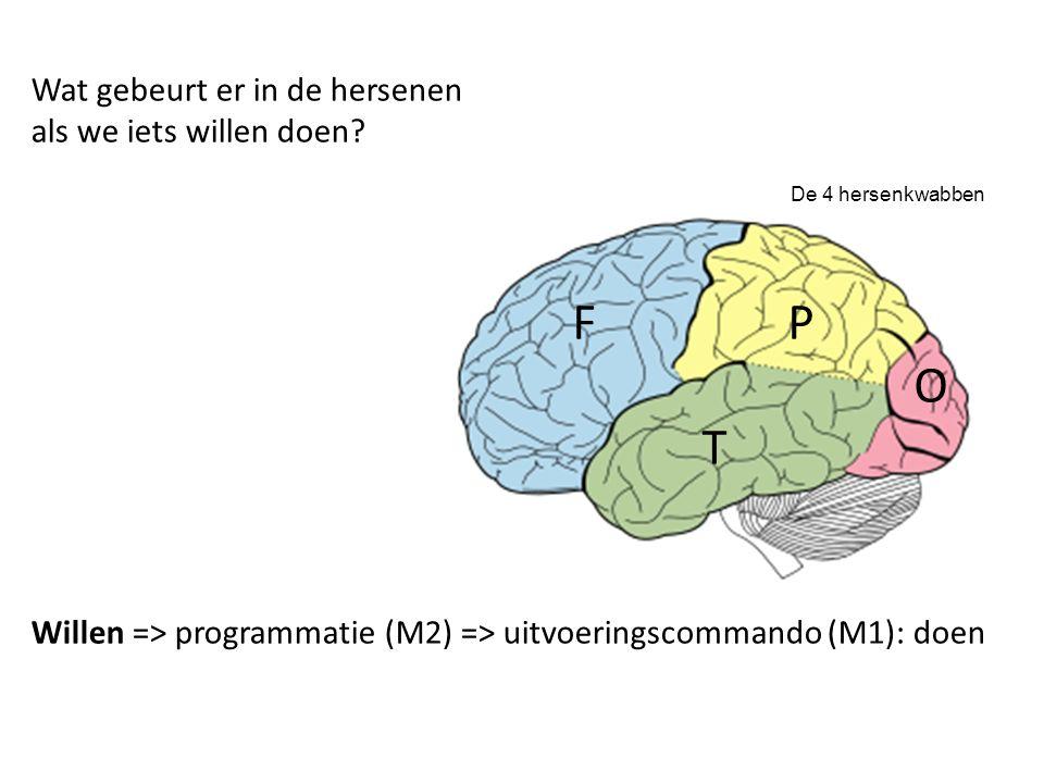 De 4 hersenkwabben F P O T Wat gebeurt er in de hersenen als we iets willen doen.