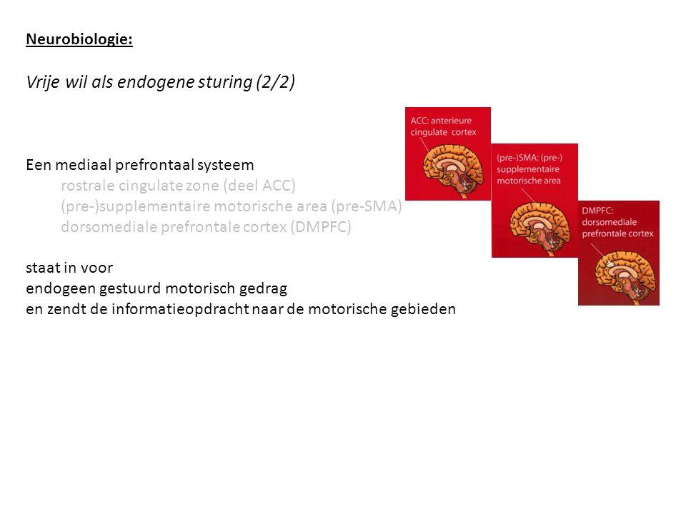 Neurobiologie: Vrije wil als endogene sturing (2/2) Een mediaal prefrontaal systeem rostrale cingulate zone (deel ACC) (pre-)supplementaire motorische area (pre-SMA) dorsomediale prefrontale cortex (DMPFC) staat in voor endogeen gestuurd motorisch gedrag en zendt de informatieopdracht naar de motorische gebieden
