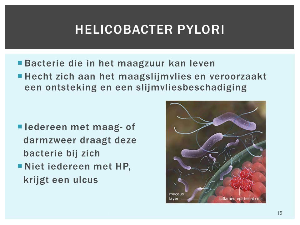  Bacterie die in het maagzuur kan leven  Hecht zich aan het maagslijmvlies en veroorzaakt een ontsteking en een slijmvliesbeschadiging  Iedereen met maag- of darmzweer draagt deze bacterie bij zich  Niet iedereen met HP, krijgt een ulcus Hfst 6 Aandoeningen van het maagdarmkanaal 15 HELICOBACTER PYLORI