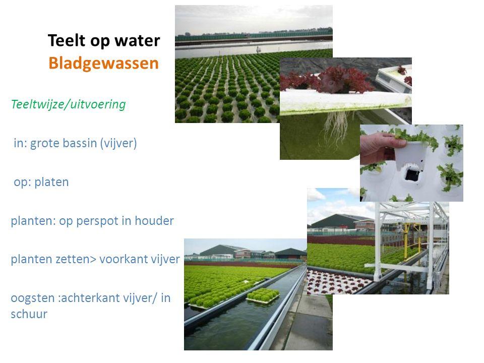 Teelt op water Bladgewassen Teeltwijze/uitvoering in: grote bassin (vijver) op: platen planten: op perspot in houder planten zetten> voorkant vijver oogsten :achterkant vijver/ in schuur