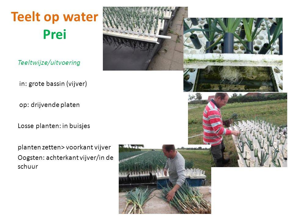Teelt op water Prei Teeltwijze/uitvoering in: grote bassin (vijver) op: drijvende platen Losse planten: in buisjes planten zetten> voorkant vijver Oogsten: achterkant vijver/in de schuur