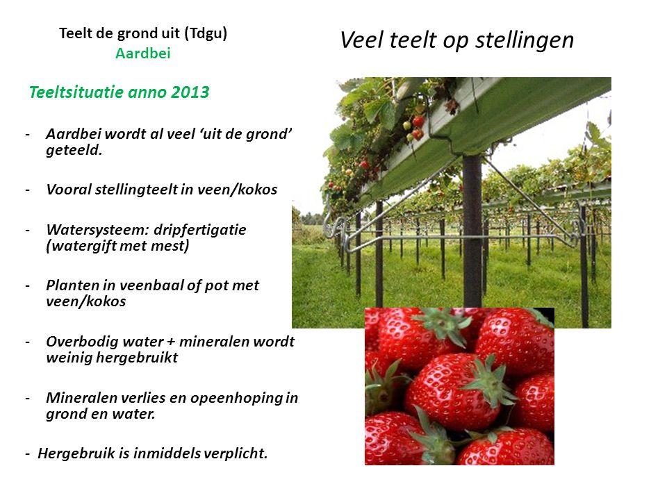 Teelt de grond uit (Tdgu) Aardbei Veel teelt op stellingen Teeltsituatie anno 2013 -Aardbei wordt al veel 'uit de grond' geteeld.