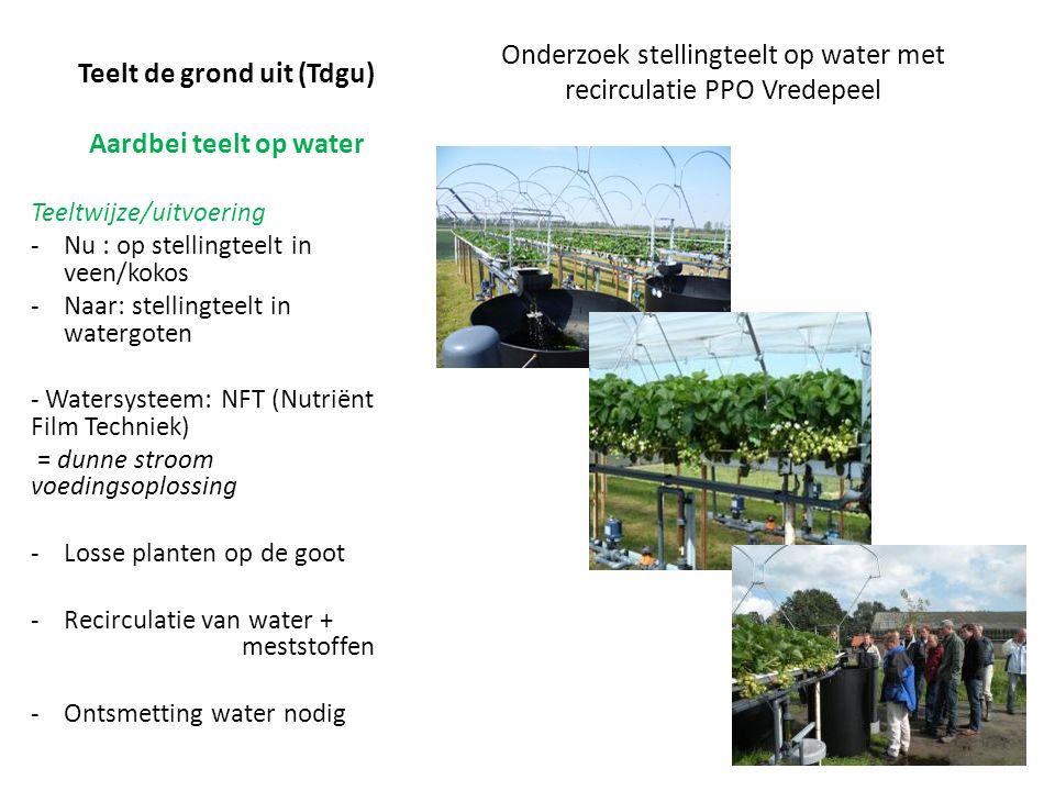 Teelt de grond uit (Tdgu) Aardbei teelt op water Onderzoek stellingteelt op water met recirculatie PPO Vredepeel Teeltwijze/uitvoering -Nu : op stellingteelt in veen/kokos -Naar: stellingteelt in watergoten - Watersysteem: NFT (Nutriënt Film Techniek) = dunne stroom voedingsoplossing -Losse planten op de goot -Recirculatie van water + meststoffen -Ontsmetting water nodig