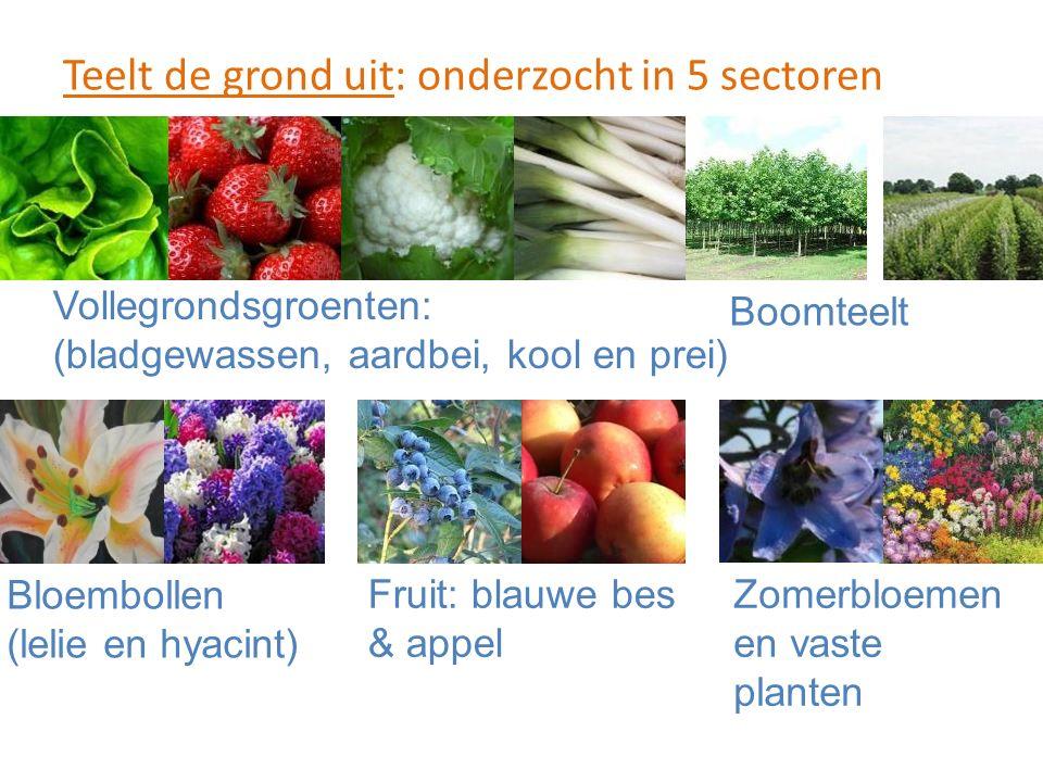 Teelt de grond uit: onderzocht in 5 sectoren Vollegrondsgroenten: (bladgewassen, aardbei, kool en prei) Boomteelt Bloembollen (lelie en hyacint) Fruit: blauwe bes & appel Zomerbloemen en vaste planten