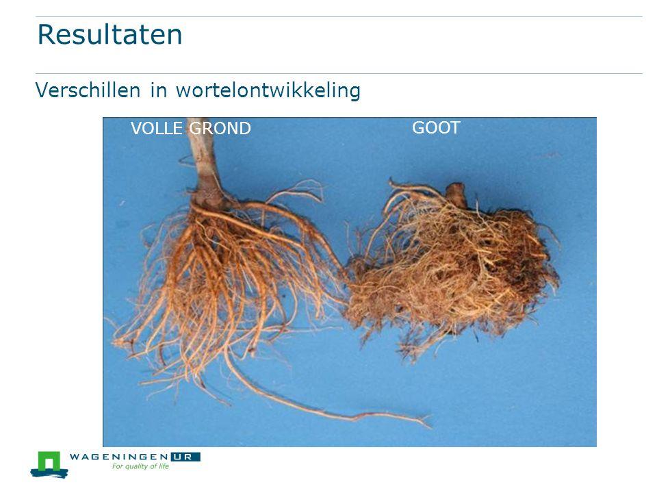 Resultaten Verschillen in wortelontwikkeling GOOT VOLLE GROND