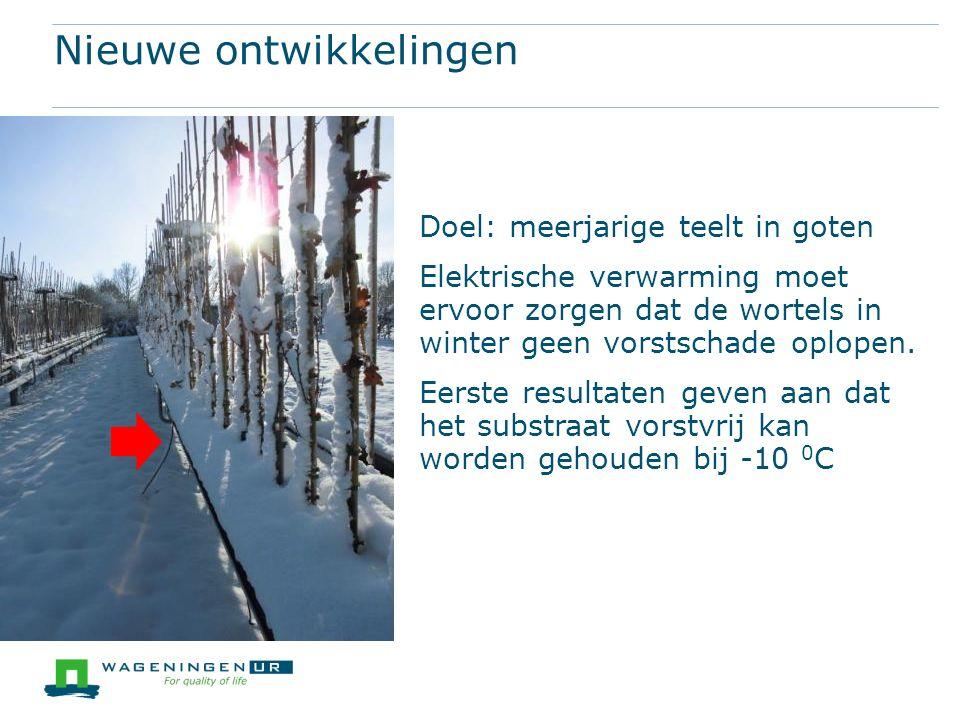 Nieuwe ontwikkelingen Doel: meerjarige teelt in goten Elektrische verwarming moet ervoor zorgen dat de wortels in winter geen vorstschade oplopen.