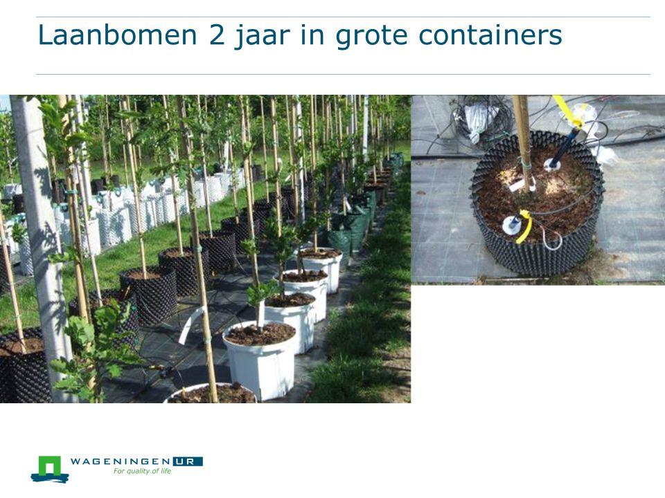 Laanbomen 2 jaar in grote containers