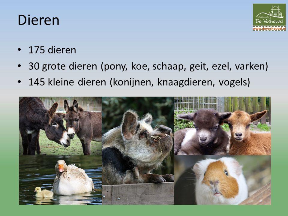 Dieren 175 dieren 30 grote dieren (pony, koe, schaap, geit, ezel, varken) 145 kleine dieren (konijnen, knaagdieren, vogels)