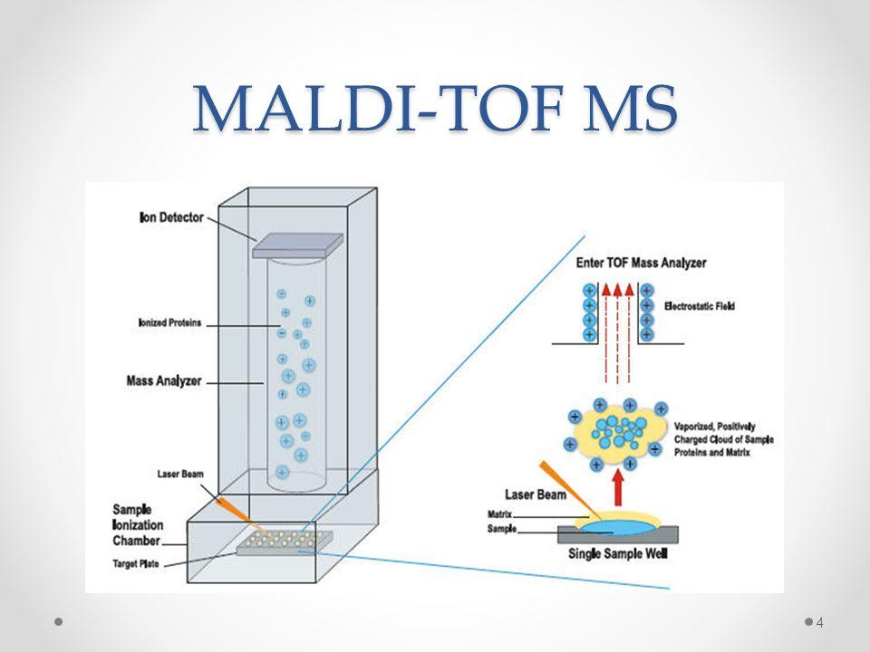 MALDI-TOF scores 5