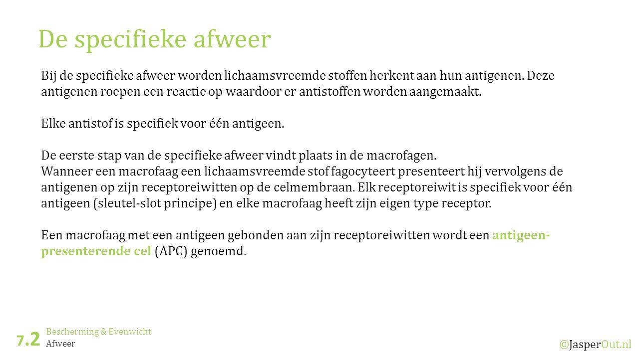 Bescherming & Evenwicht 7.2 ©JasperOut.nl Afweer De specifieke afweer Bij de specifieke afweer worden lichaamsvreemde stoffen herkent aan hun antigenen.