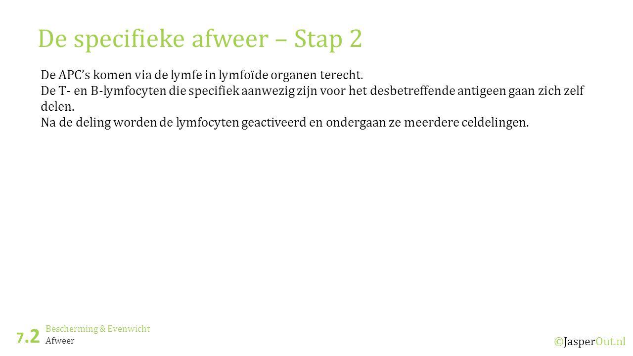 Bescherming & Evenwicht 7.2 ©JasperOut.nl Afweer De specifieke afweer – Stap 2 De APC's komen via de lymfe in lymfoïde organen terecht.
