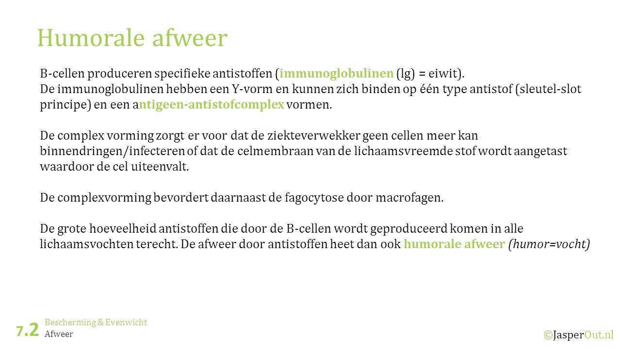 Bescherming & Evenwicht 7.2 ©JasperOut.nl Afweer Humorale afweer B-cellen produceren specifieke antistoffen (immunoglobulinen (lg) = eiwit).