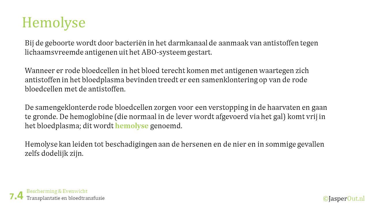 Bescherming & Evenwicht 7.4 ©JasperOut.nl Transplantatie en bloedtransfusie Hemolyse Bij de geboorte wordt door bacteriën in het darmkanaal de aanmaak van antistoffen tegen lichaamsvreemde antigenen uit het ABO-systeem gestart.