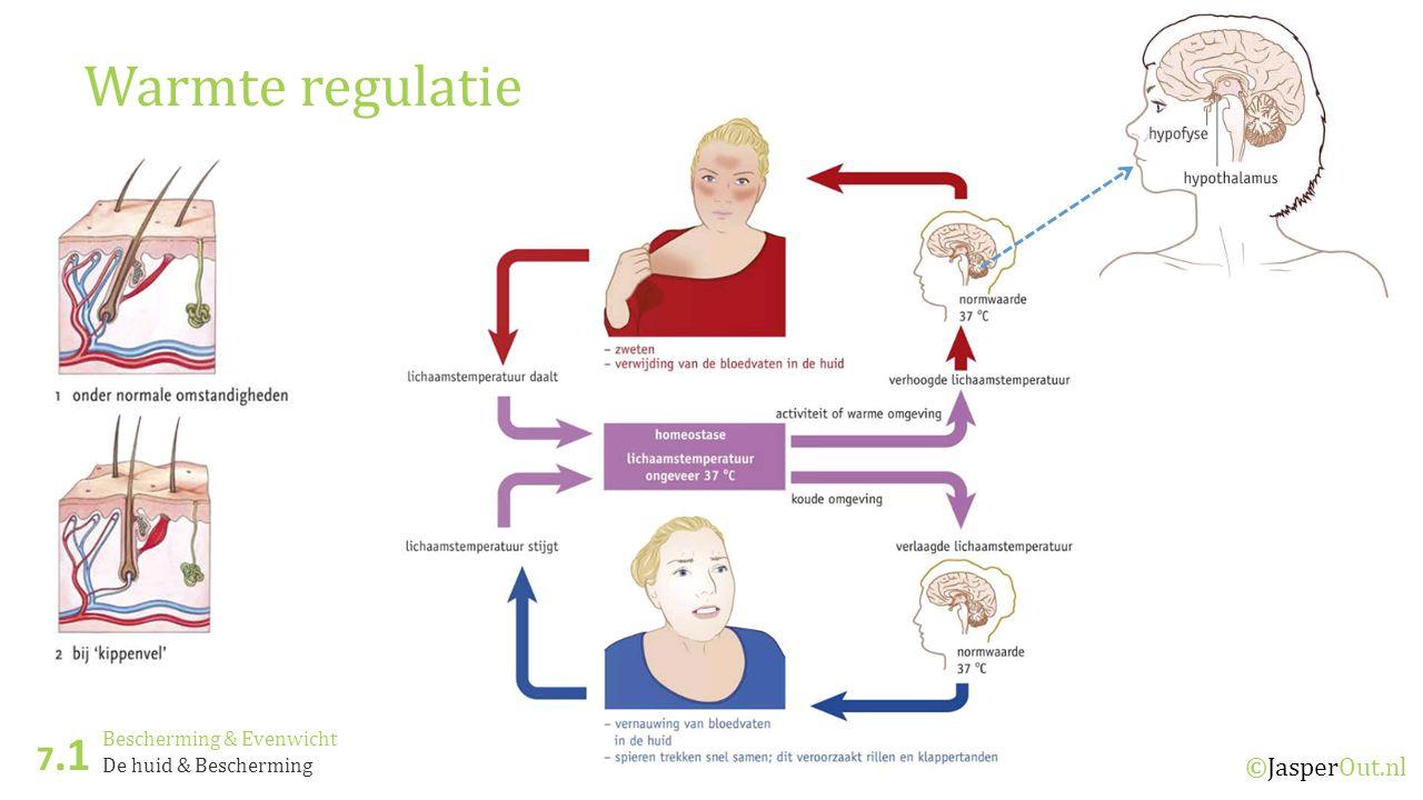 Bescherming & Evenwicht 7.1 ©JasperOut.nl De huid & Bescherming Warmte regulatie