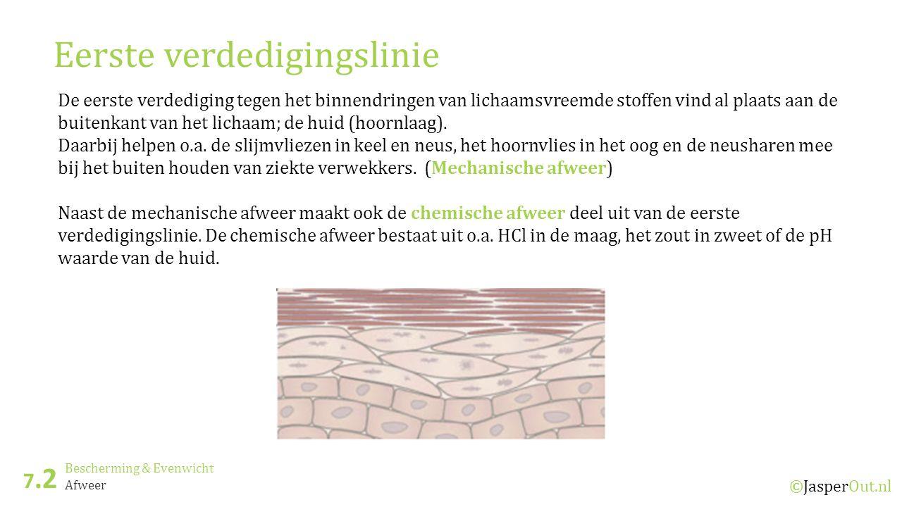 Bescherming & Evenwicht 7.2 ©JasperOut.nl Afweer Eerste verdedigingslinie De eerste verdediging tegen het binnendringen van lichaamsvreemde stoffen vind al plaats aan de buitenkant van het lichaam; de huid (hoornlaag).