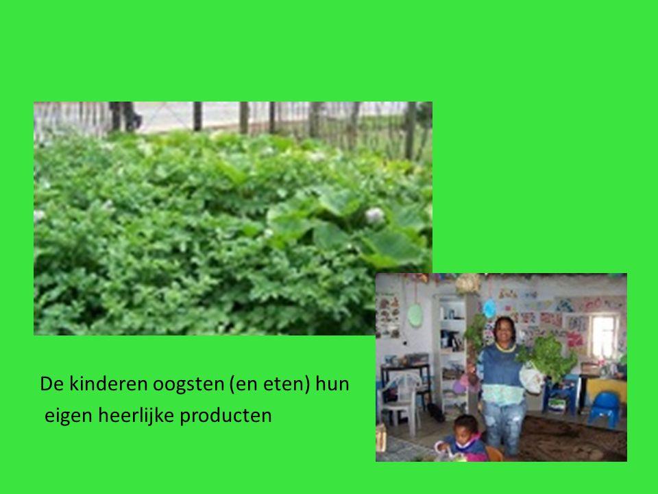 De kinderen oogsten (en eten) hun eigen heerlijke producten