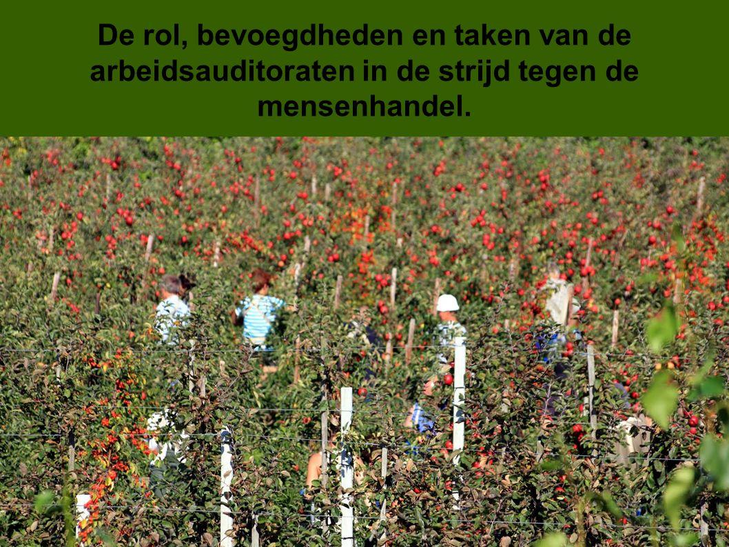 De rol, bevoegdheden en taken van de arbeidsauditoraten in de strijd tegen de mensenhandel.
