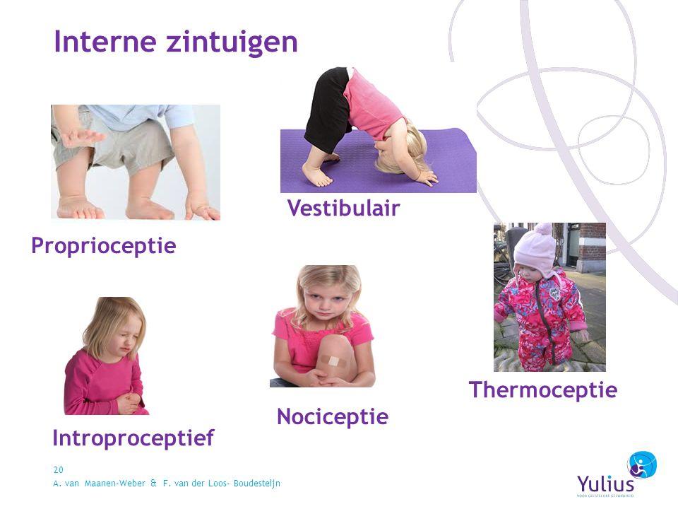 Interne zintuigen 20 Vestibulair Proprioceptie Introproceptief Nociceptie Thermoceptie A.