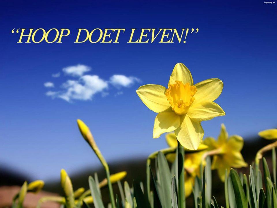 The only book God ever wrote 1 Johannes Leven, licht en liefde