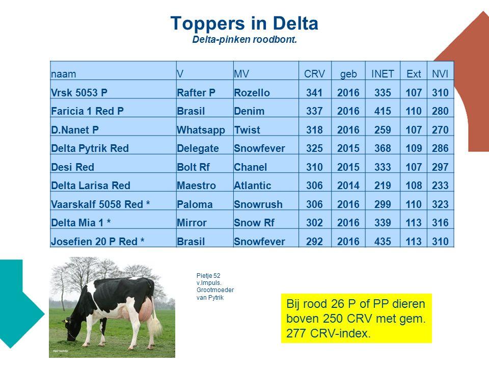 Toppers in Delta Delta-pinken roodbont.