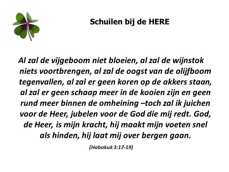 Schuilen bij de HERE Al zal de vijgeboom niet bloeien, al zal de wijnstok niets voortbrengen, al zal de oogst van de olijfboom tegenvallen, al zal er geen koren op de akkers staan, al zal er geen schaap meer in de kooien zijn en geen rund meer binnen de omheining –toch zal ik juichen voor de Heer, jubelen voor de God die mij redt.