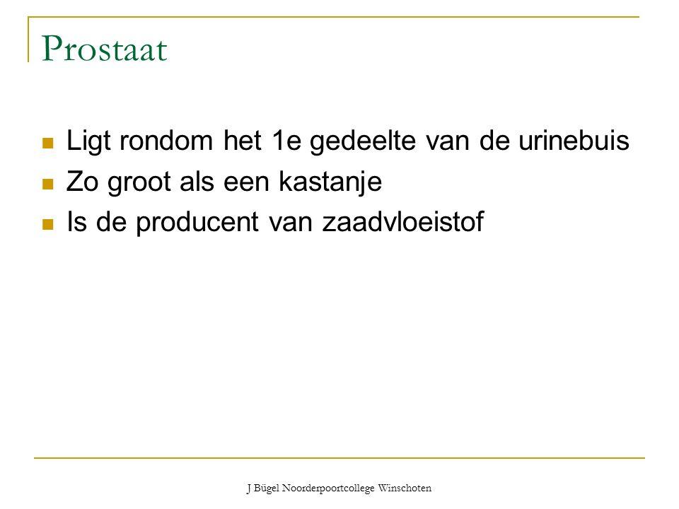 J Bügel Noorderpoortcollege Winschoten Prostaat Ligt rondom het 1e gedeelte van de urinebuis Zo groot als een kastanje Is de producent van zaadvloeistof