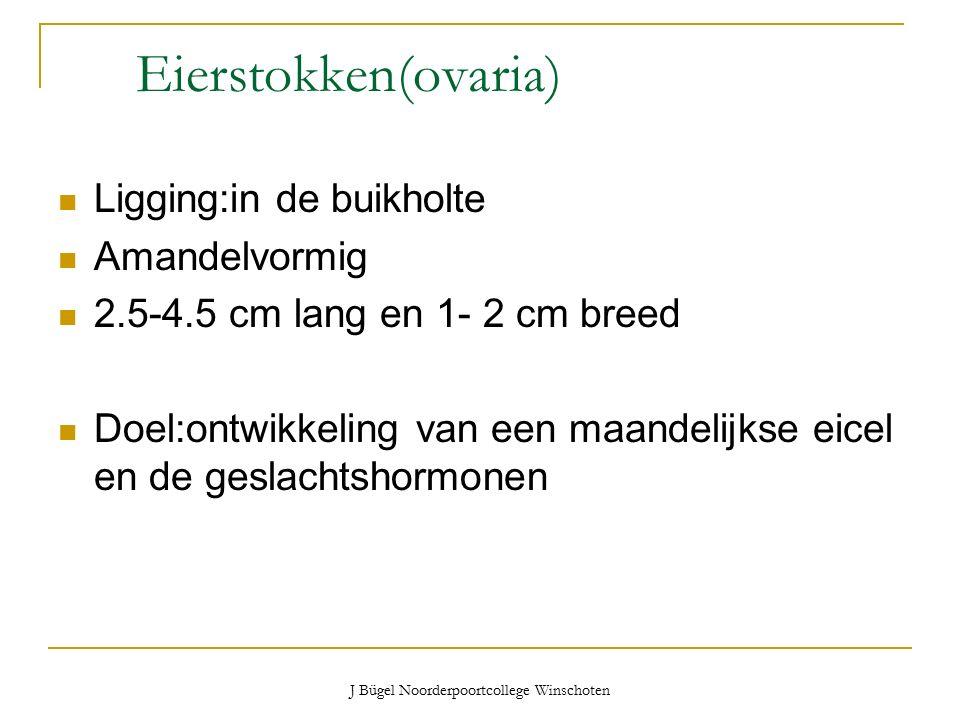 J Bügel Noorderpoortcollege Winschoten Eierstokken(ovaria) Ligging:in de buikholte Amandelvormig 2.5-4.5 cm lang en 1- 2 cm breed Doel:ontwikkeling van een maandelijkse eicel en de geslachtshormonen