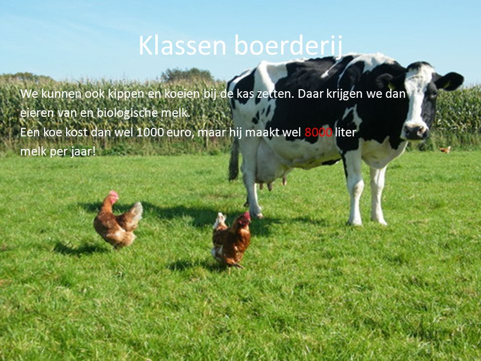 Klassen boerderij We kunnen ook kippen en koeien bij de kas zetten.