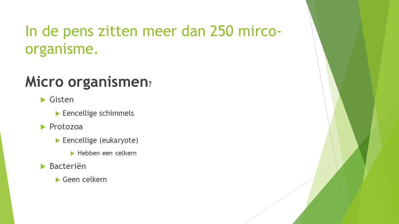 In de pens zitten meer dan 250 mirco- organisme. Micro organismen .