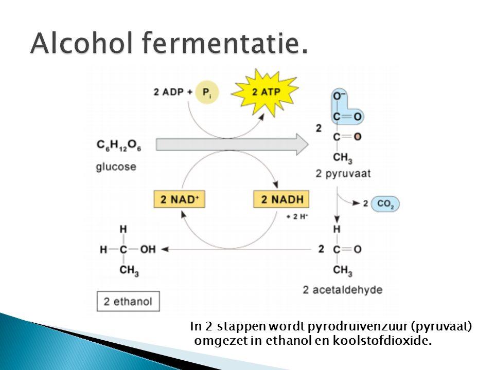 In 2 stappen wordt pyrodruivenzuur (pyruvaat) omgezet in ethanol en koolstofdioxide.
