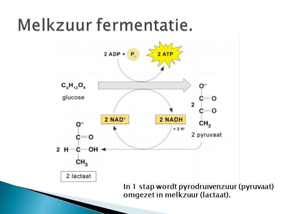 In 1 stap wordt pyrodruivenzuur (pyruvaat) omgezet in melkzuur (lactaat).