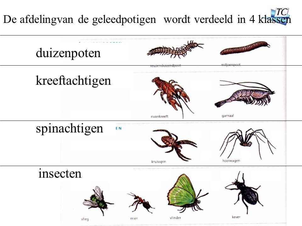 duizenpoten kreeftachtigen spinachtigen insecten De afdelingvan de geleedpotigen wordt verdeeld in 4 klassen
