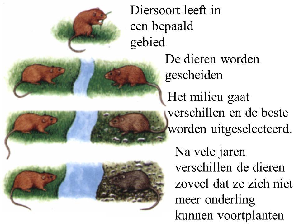Diersoort leeft in een bepaald gebied De dieren worden gescheiden Het milieu gaat verschillen en de beste worden uitgeselecteerd.