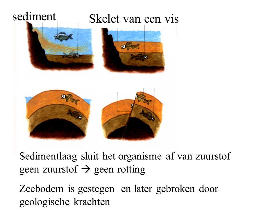 sediment Skelet van een vis Sedimentlaag sluit het organisme af van zuurstof geen zuurstof  geen rotting Zeebodem is gestegen en later gebroken door geologische krachten
