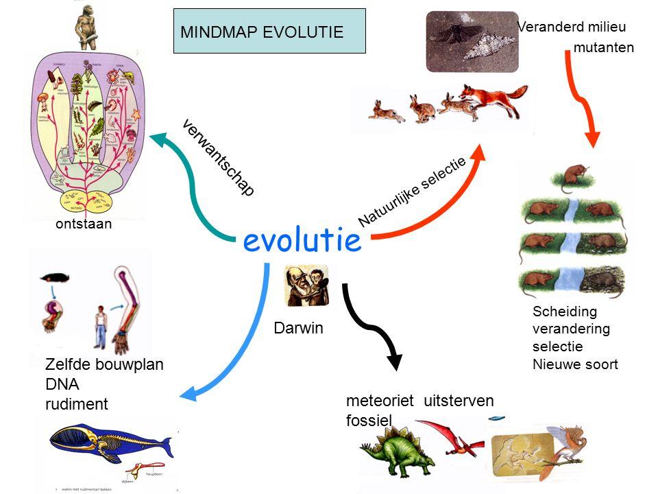 evolutie Natuurlijke selectie Veranderd milieu Scheiding verandering selectie Nieuwe soort Zelfde bouwplan DNA rudiment meteoriet uitsterven fossiel verwantschap Darwin MINDMAP EVOLUTIE mutanten ontstaan