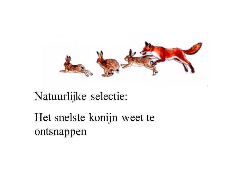 Natuurlijke selectie: Het snelste konijn weet te ontsnappen