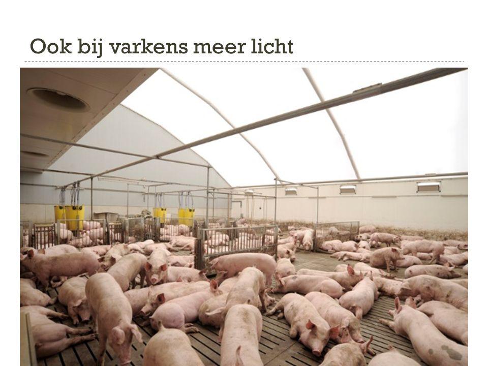 Ook bij varkens meer licht