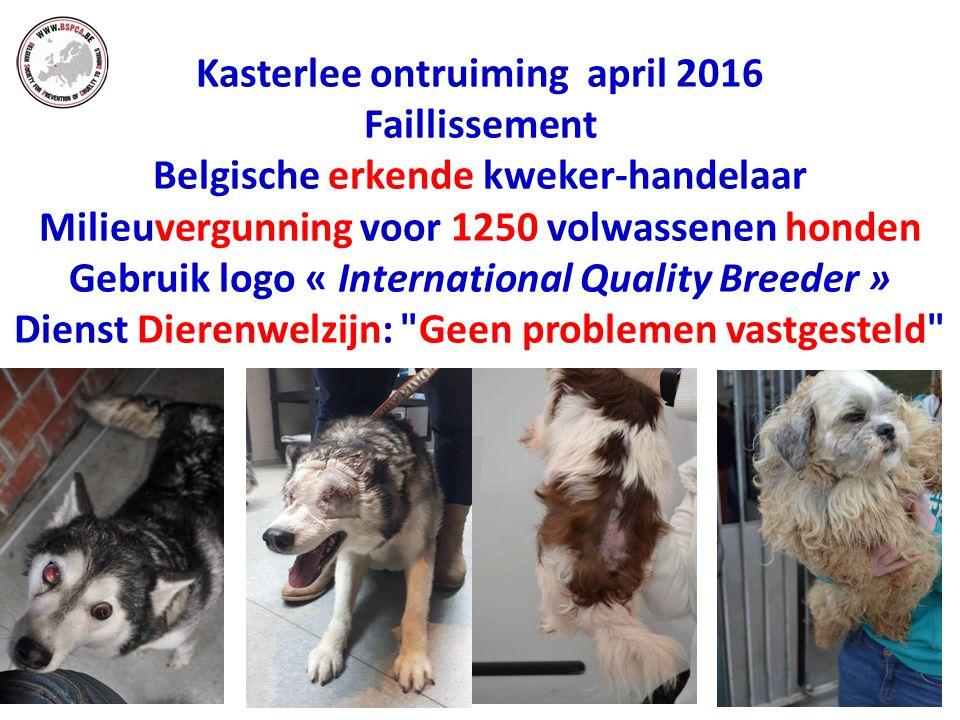 Kasterlee ontruiming april 2016 Faillissement Belgische erkende kweker-handelaar Milieuvergunning voor 1250 volwassenen honden Gebruik logo « International Quality Breeder » Dienst Dierenwelzijn: Geen problemen vastgesteld