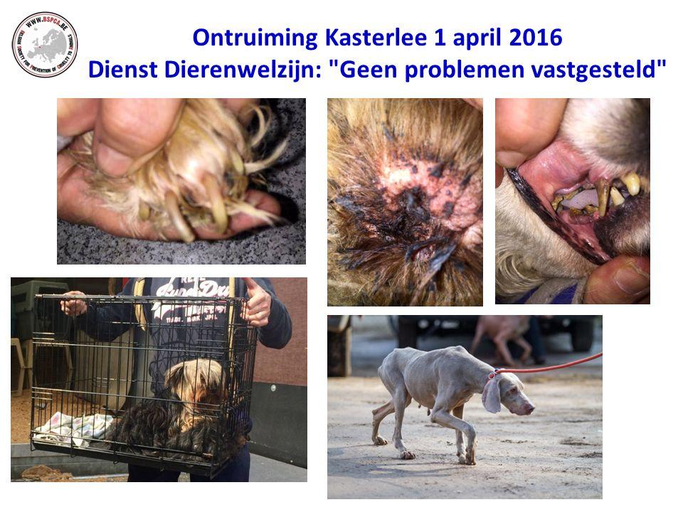 Ontruiming Kasterlee 1 april 2016 Dienst Dierenwelzijn: Geen problemen vastgesteld