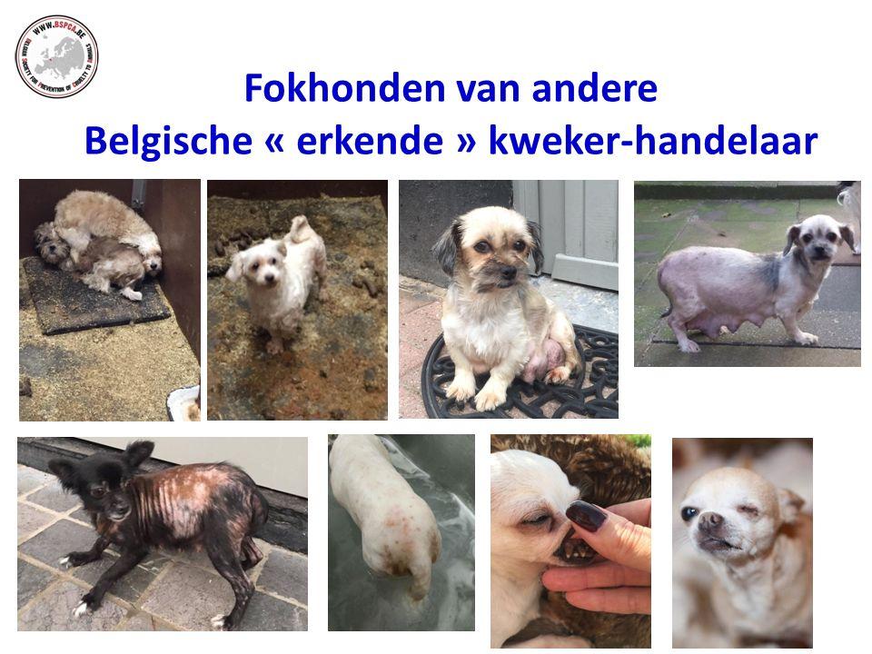 Fokhonden van andere Belgische « erkende » kweker-handelaar