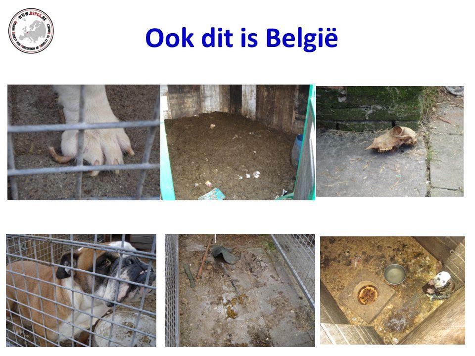 Ook dit is België