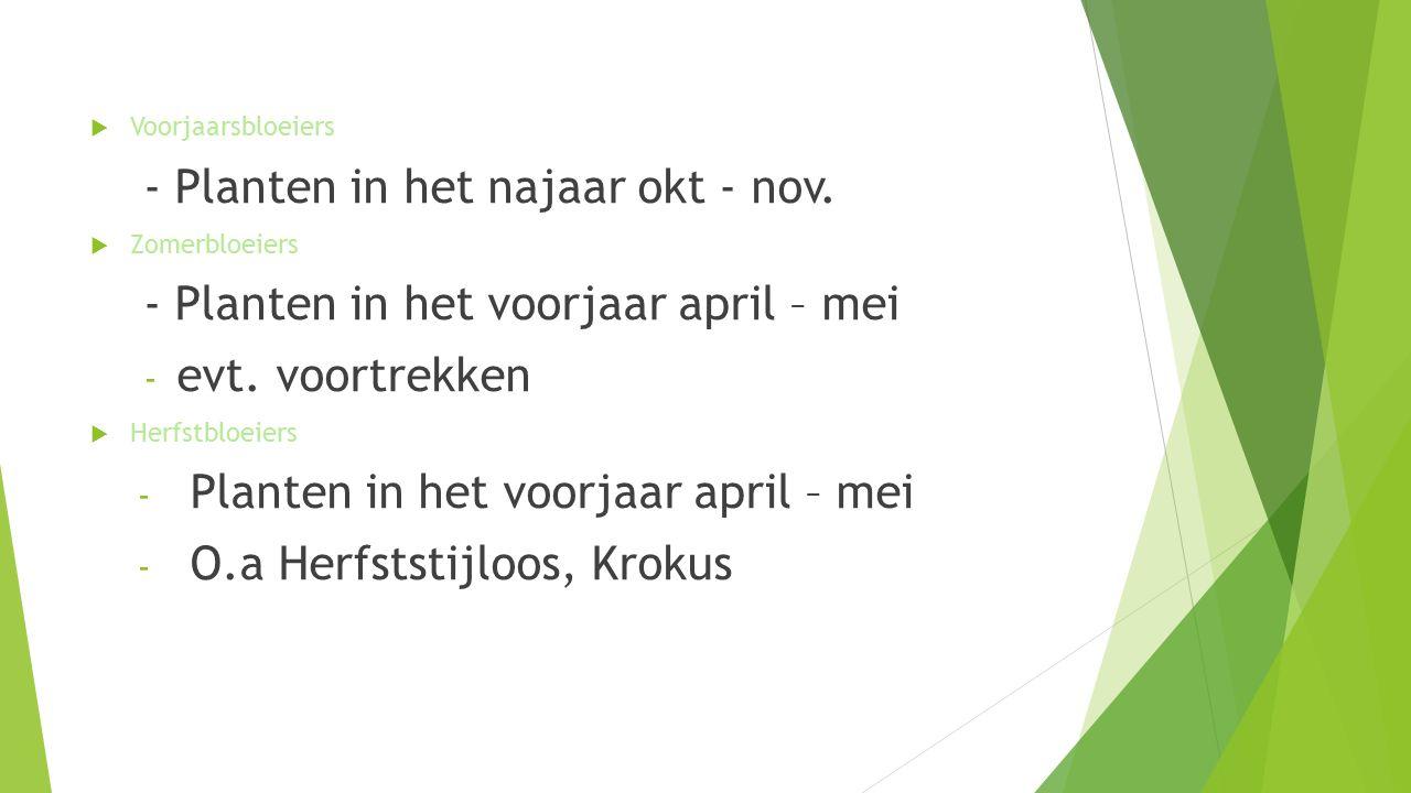  Voorjaarsbloeiers - Planten in het najaar okt - nov.