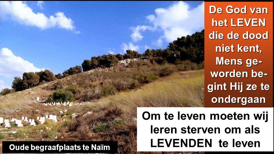 Het evangelie van Jezus kan ook vandaag de dood van de wereld omvormen Vallei van Galilea Clic: https://www.eacnur.org/emergencia/refugiados-sirios- necesitan-ayuda?gclid=COOuoJ_s5swCFUs6GwoditkKYw https://www.eacnur.org/emergencia/refugiados-sirios- necesitan-ayuda?gclid=COOuoJ_s5swCFUs6GwoditkKYw Het zal ook van onze solidaire liefde afhangen dat de valleien des doods plaatsen van Leven worden