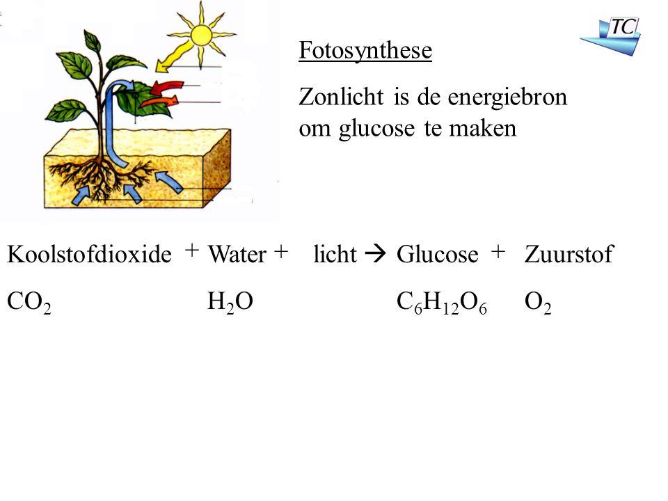 koolstofdioxide opname zeewater