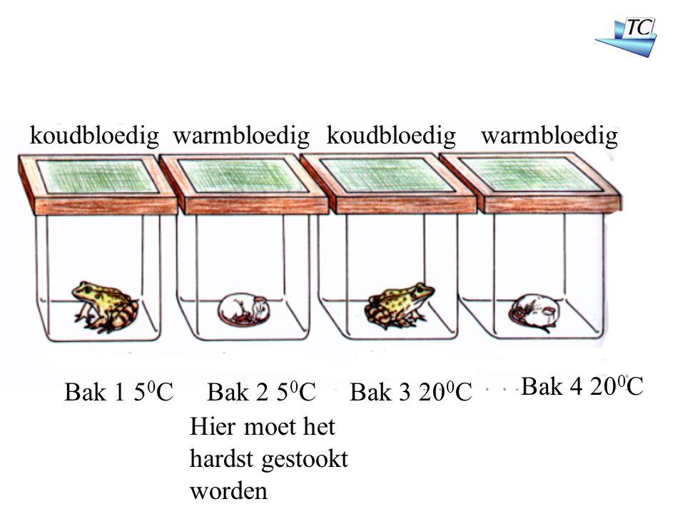 Bak 1 5 0 CBak 2 5 0 CBak 3 20 0 C Bak 4 20 0 C koudbloedig warmbloedig Hier moet het hardst gestookt worden